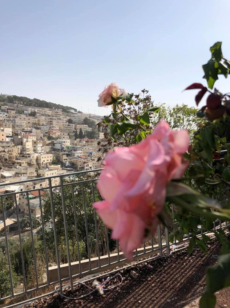 CITY OF DAVID ROSE